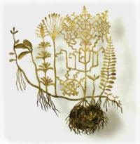 Ieva Krūmiņa. Pasaules koks