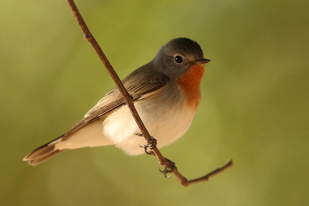 Putni rakstnieka dārzā
