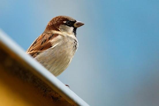 Ko rudenī dara putni rakstnieka dārzā